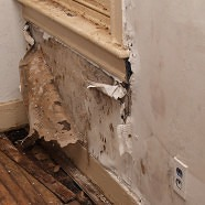 Mold Remediation & Clean-up